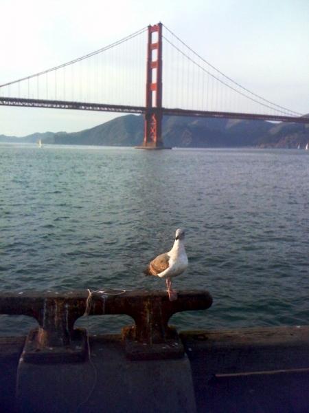 LostinSF Seagull