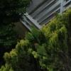 Les perroquets en camouflage