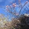 Spring in November